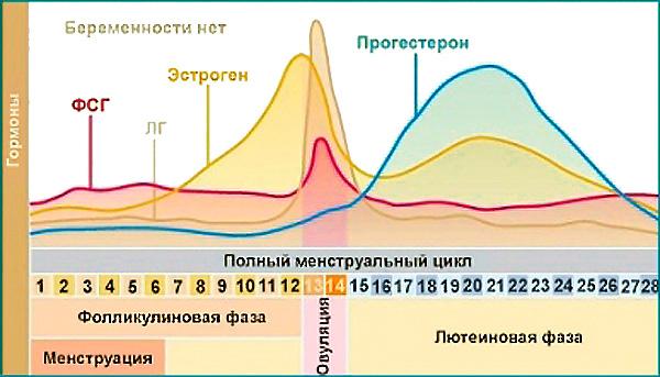 Изменение гормонального фона при нормальном менструальном цикле