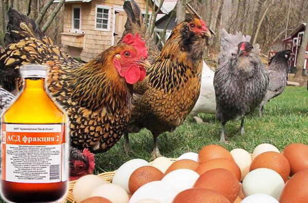 АСД для яйценоскости