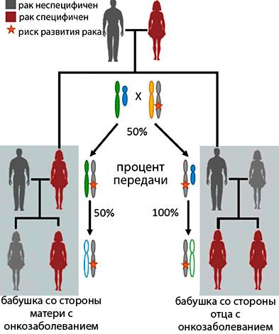Генетическое наследование предрасположенности к раковым заболеваниям
