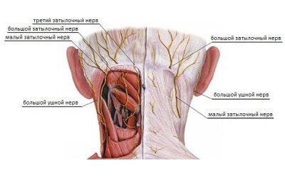 Невралгия затылочного нерва: симптомы и лечение, какие нервы воспаляются?