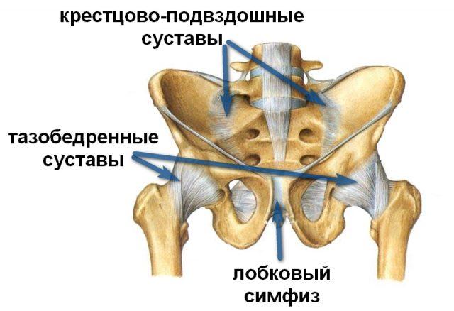 болит ли лобковая кость при беременности было
