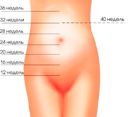 Высота стояния дна матки